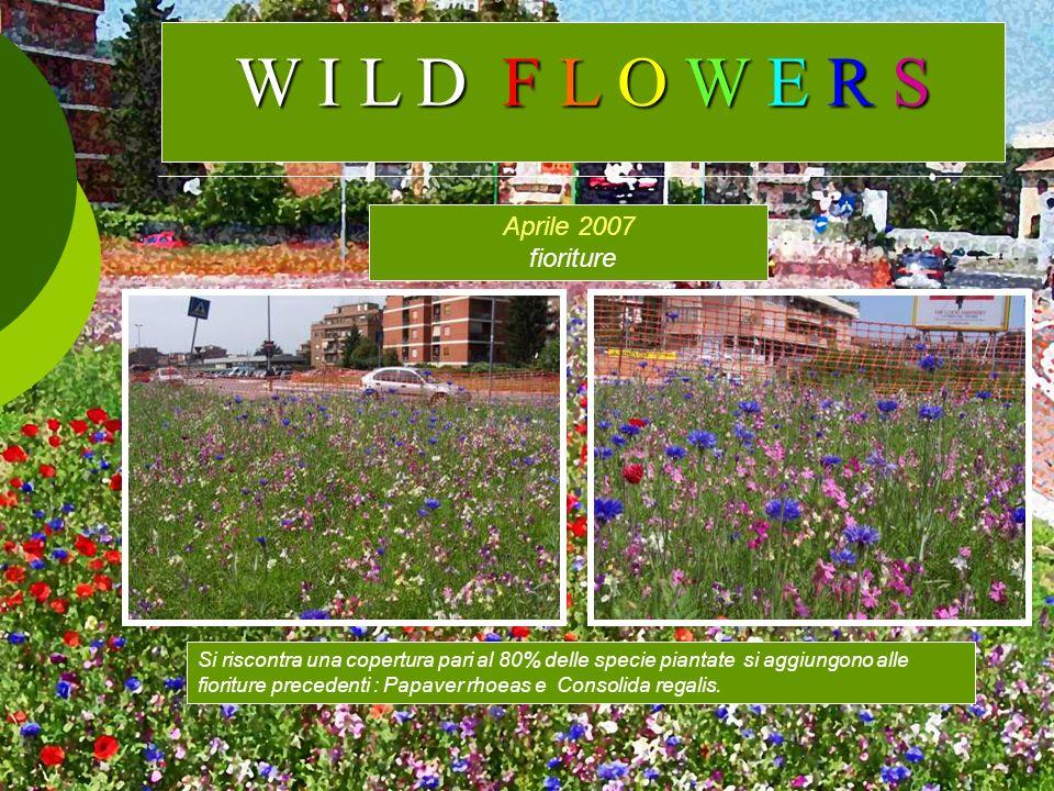 W I L D F L O W E R S Aprile 2007 fioriture