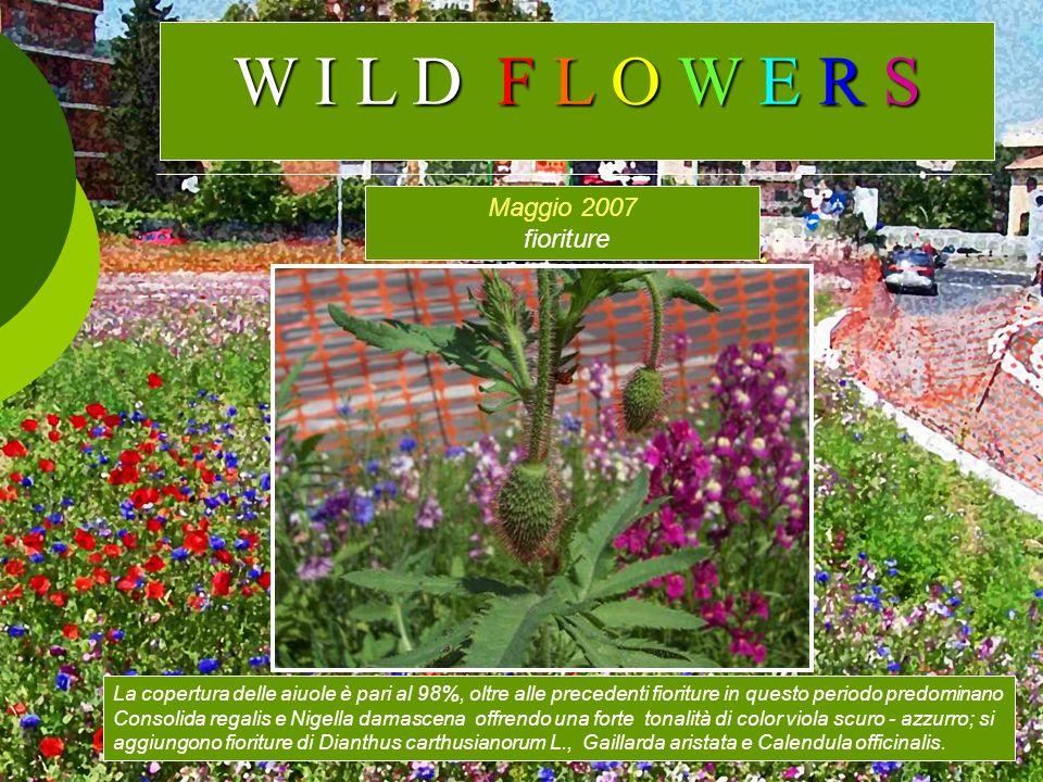 W I L D F L O W E R S Maggio 2007 fioriture
