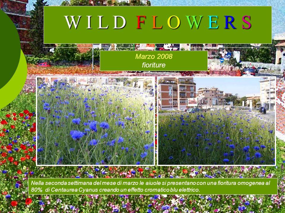 W I L D F L O W E R S Marzo 2008 fioriture