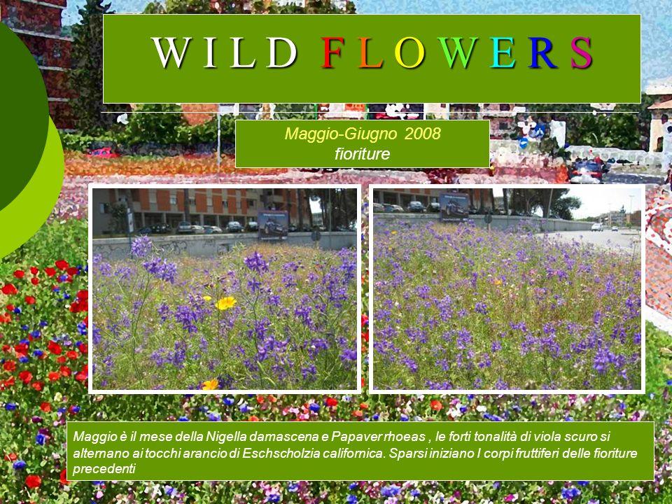 W I L D F L O W E R S Maggio-Giugno 2008 fioriture