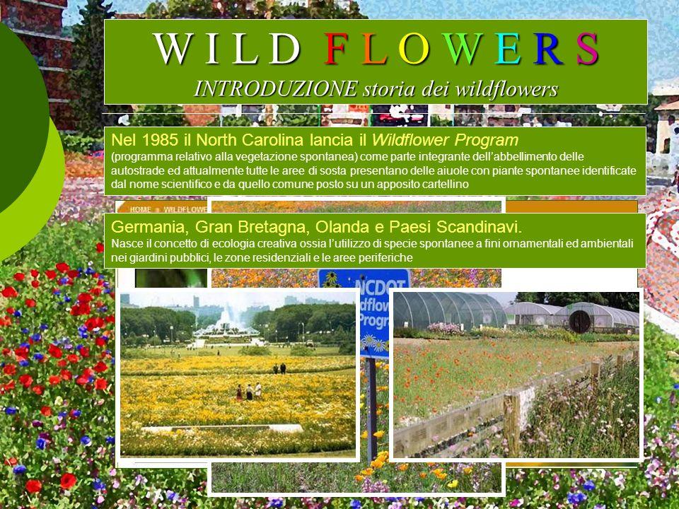 W I L D F L O W E R S INTRODUZIONE storia dei wildflowers
