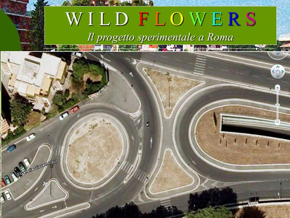 W I L D F L O W E R S Il progetto sperimentale a Roma