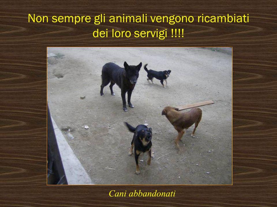 Non sempre gli animali vengono ricambiati dei loro servigi !!!!