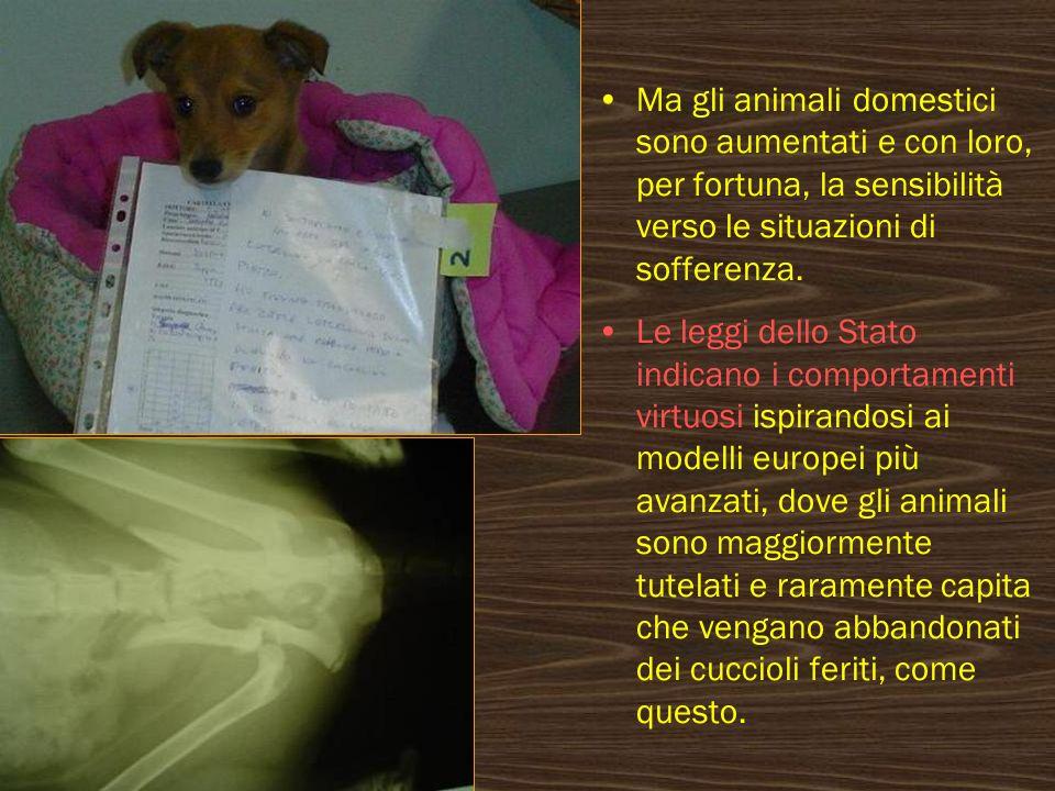 Ma gli animali domestici sono aumentati e con loro, per fortuna, la sensibilità verso le situazioni di sofferenza.
