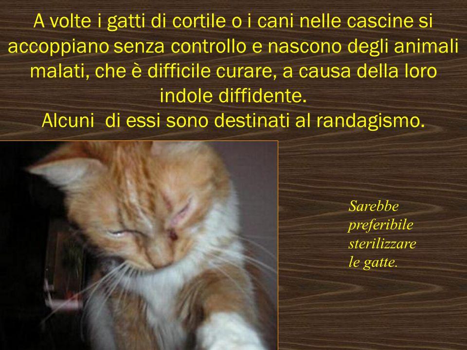 A volte i gatti di cortile o i cani nelle cascine si accoppiano senza controllo e nascono degli animali malati, che è difficile curare, a causa della loro indole diffidente. Alcuni di essi sono destinati al randagismo.