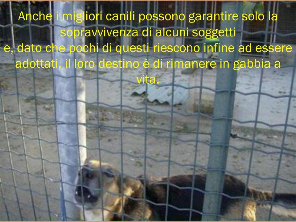 Anche i migliori canili possono garantire solo la sopravvivenza di alcuni soggetti e, dato che pochi di questi riescono infine ad essere adottati, il loro destino è di rimanere in gabbia a vita.