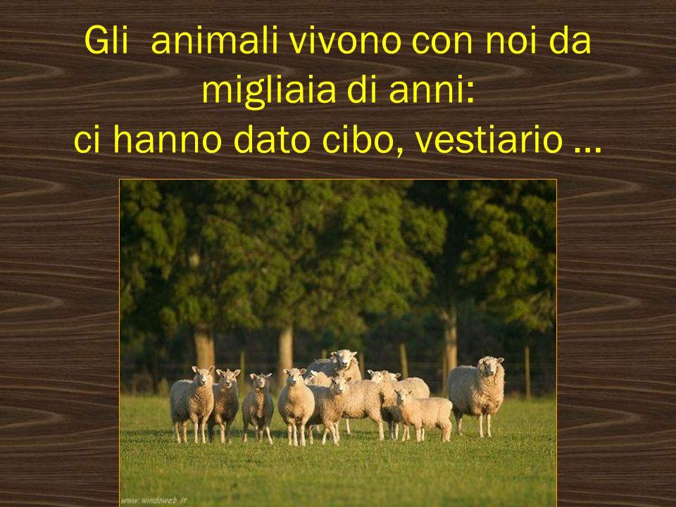 Gli animali vivono con noi da migliaia di anni: ci hanno dato cibo, vestiario …