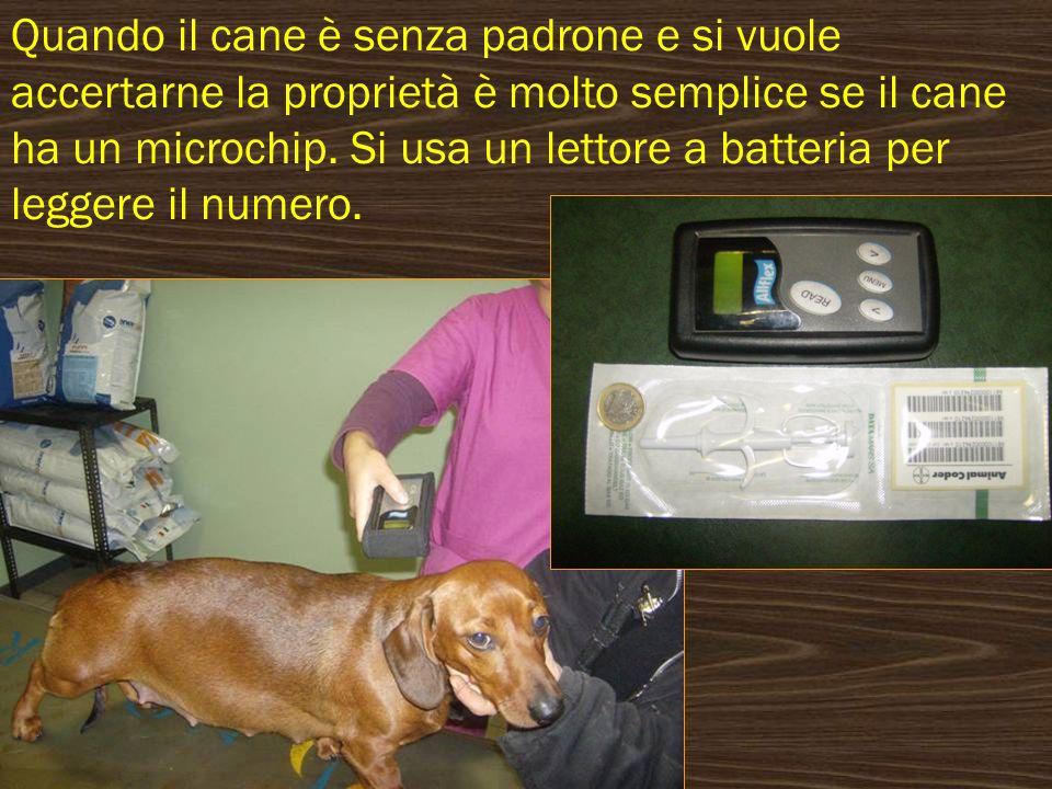 Quando il cane è senza padrone e si vuole accertarne la proprietà è molto semplice se il cane ha un microchip.