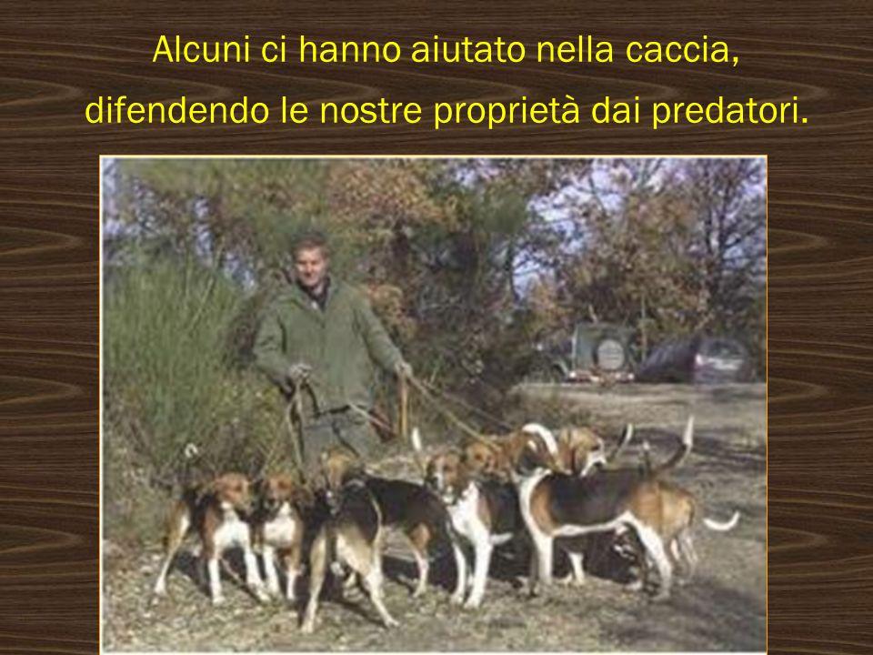 Alcuni ci hanno aiutato nella caccia, difendendo le nostre proprietà dai predatori.