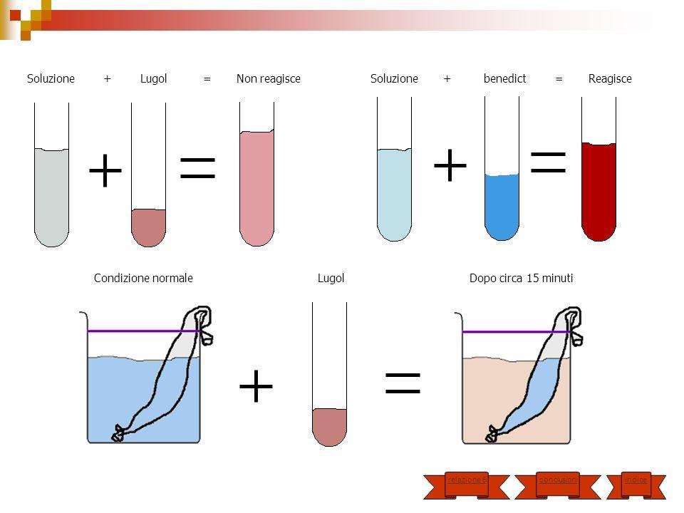 Soluzione + Lugol = Non reagisce Soluzione + benedict = Reagisce