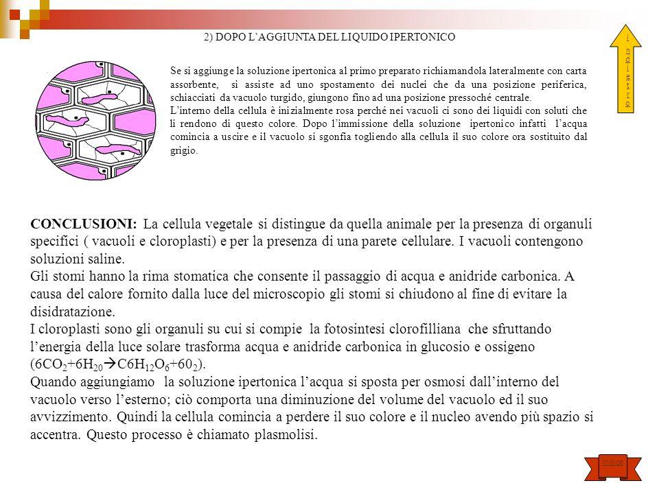 2) DOPO L'AGGIUNTA DEL LIQUIDO IPERTONICO