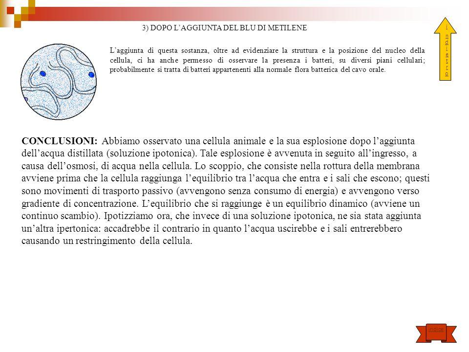 3) DOPO L'AGGIUNTA DEL BLU DI METILENE