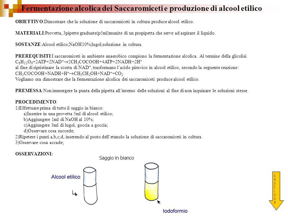 Fermentazione alcolica dei Saccaromiceti e produzione di alcool etilico