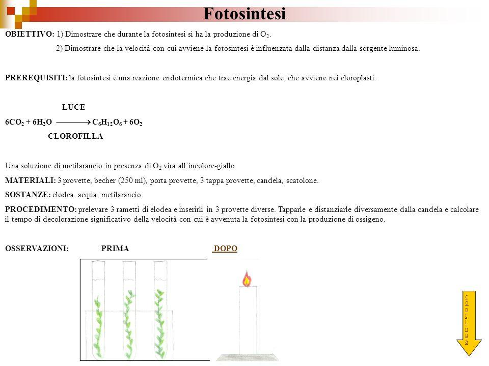 Fotosintesi OBIETTIVO: 1) Dimostrare che durante la fotosintesi si ha la produzione di O2.