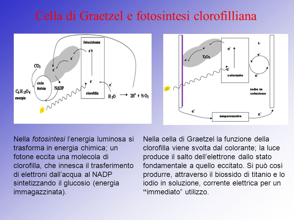 Cella di Graetzel e fotosintesi clorofilliana