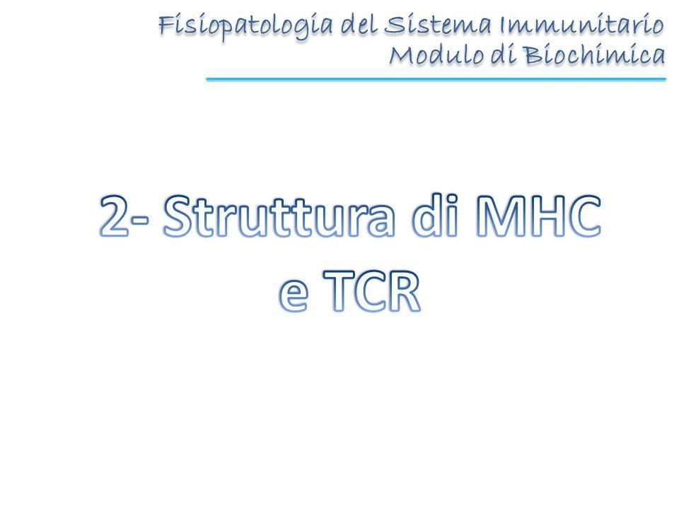2- Struttura di MHC e TCR Fisiopatologia del Sistema Immunitario
