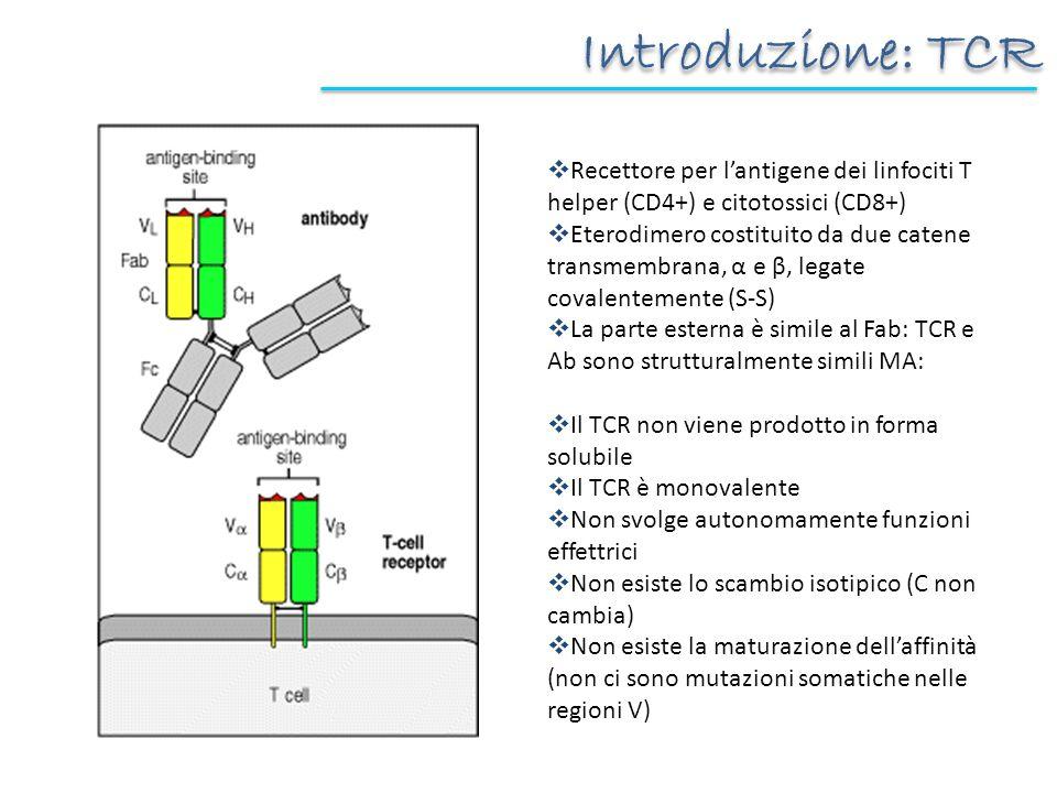 Introduzione: TCR Recettore per l'antigene dei linfociti T helper (CD4+) e citotossici (CD8+)