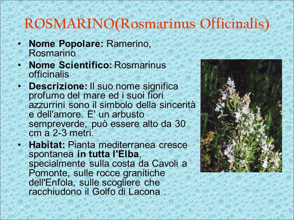 ROSMARINO(Rosmarinus Officinalis)