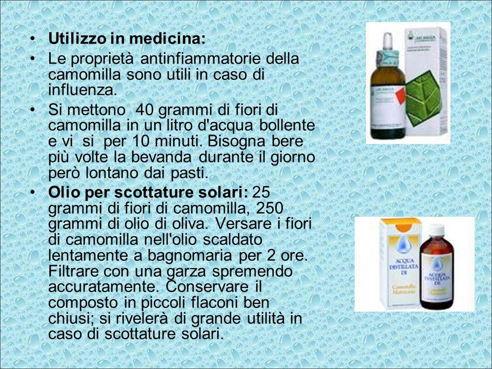 Utilizzo in medicina: Le proprietà antinfiammatorie della camomilla sono utili in caso di influenza.