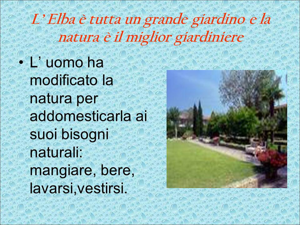 L' Elba è tutta un grande giardino e la natura è il miglior giardiniere