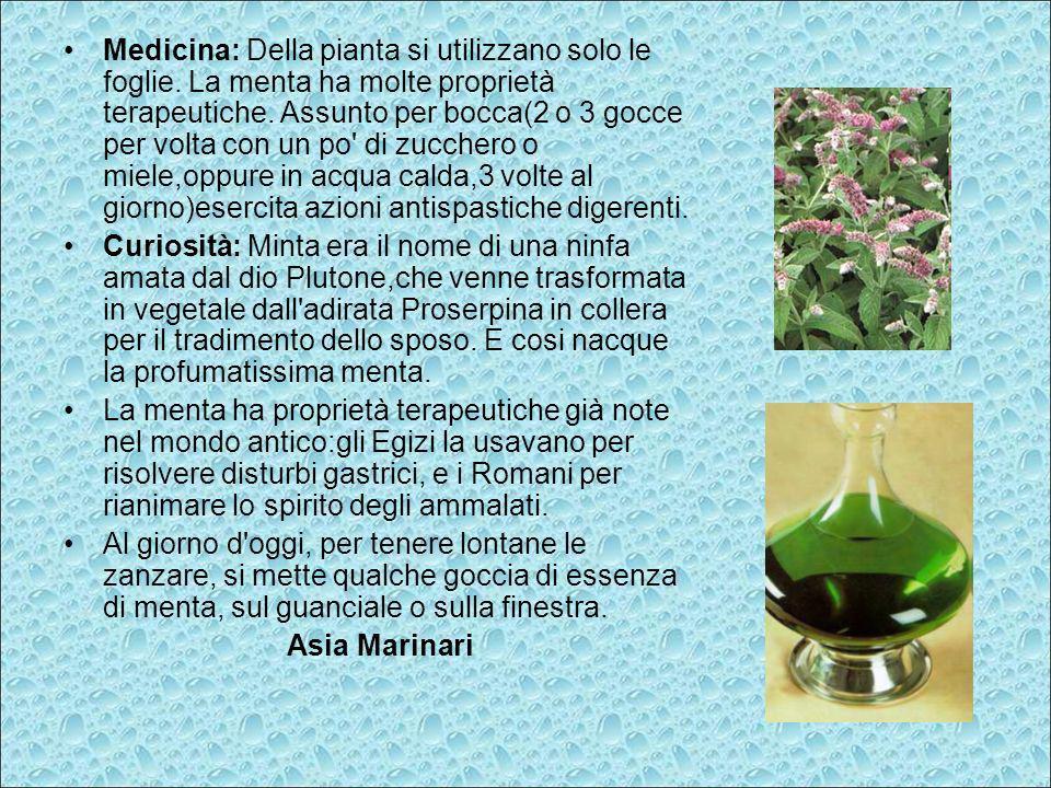 Medicina: Della pianta si utilizzano solo le foglie