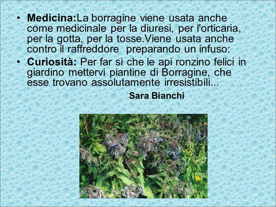 Medicina:La borragine viene usata anche come medicinale per la diuresi, per l orticaria, per la gotta, per la tosse.Viene usata anche contro il raffreddore preparando un infuso: