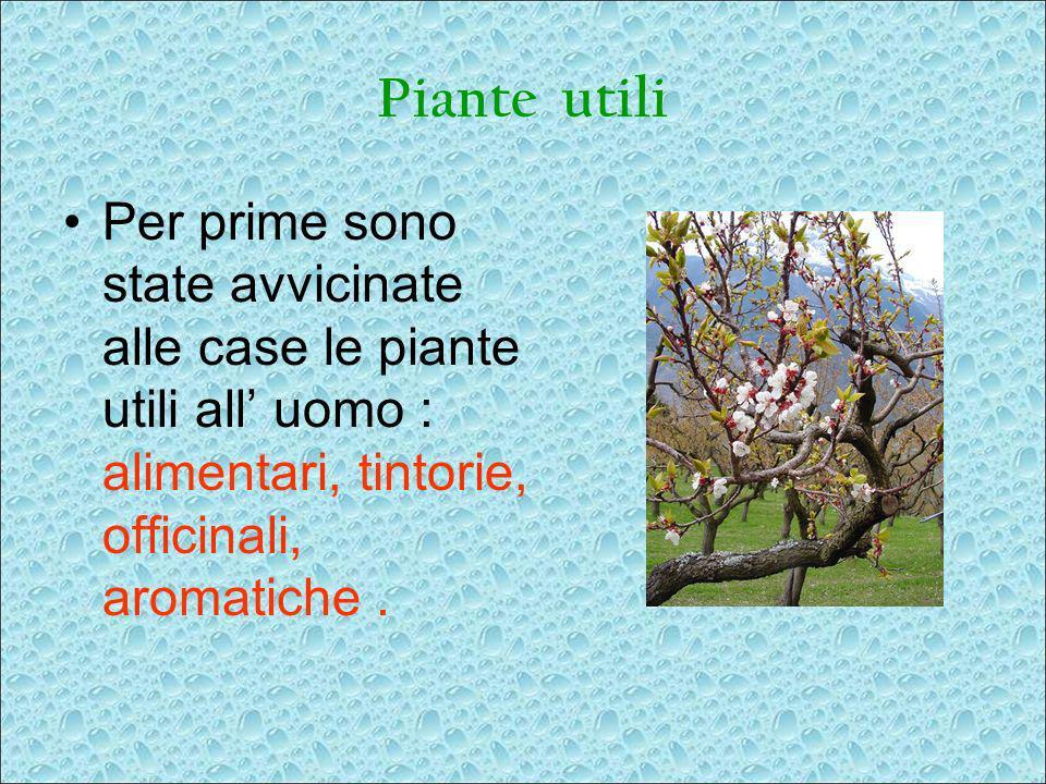 Piante utili Per prime sono state avvicinate alle case le piante utili all' uomo : alimentari, tintorie, officinali, aromatiche .