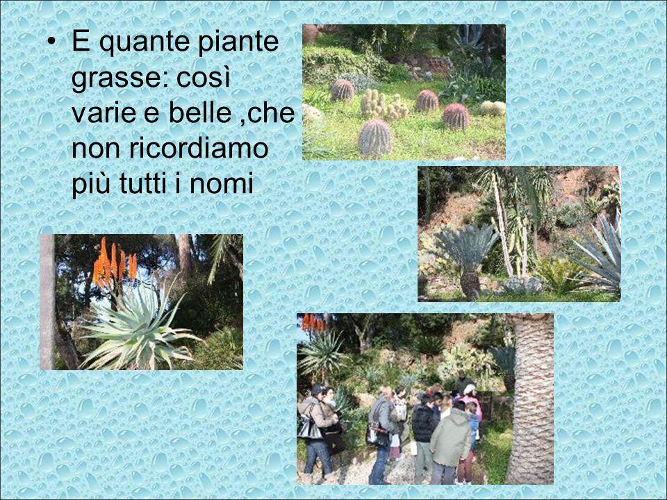 E quante piante grasse: così varie e belle ,che non ricordiamo più tutti i nomi