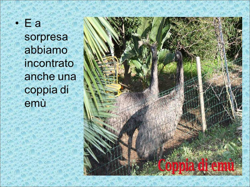 E a sorpresa abbiamo incontrato anche una coppia di emù