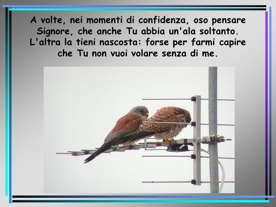 A volte, nei momenti di confidenza, oso pensare Signore, che anche Tu abbia un ala soltanto.