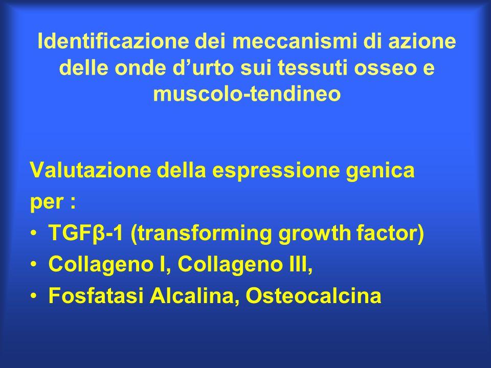 Identificazione dei meccanismi di azione delle onde d'urto sui tessuti osseo e muscolo-tendineo