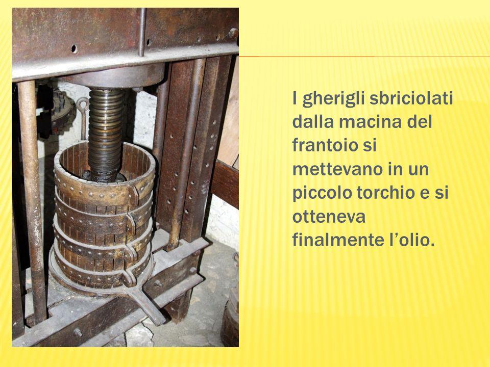 I gherigli sbriciolati dalla macina del frantoio si mettevano in un piccolo torchio e si otteneva finalmente l'olio.