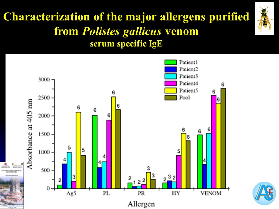 Characterization of the major allergens purified