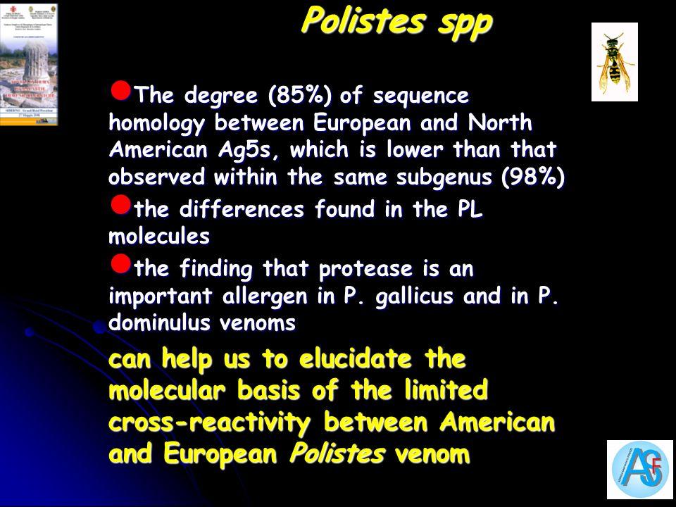 Polistes spp