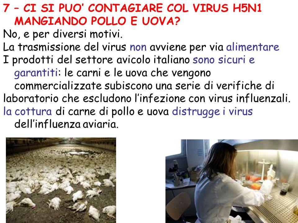 7 – CI SI PUO' CONTAGIARE COL VIRUS H5N1 MANGIANDO POLLO E UOVA