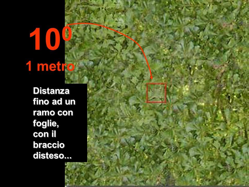 100 1 metro Distanza fino ad un ramo con foglie, con il braccio disteso...