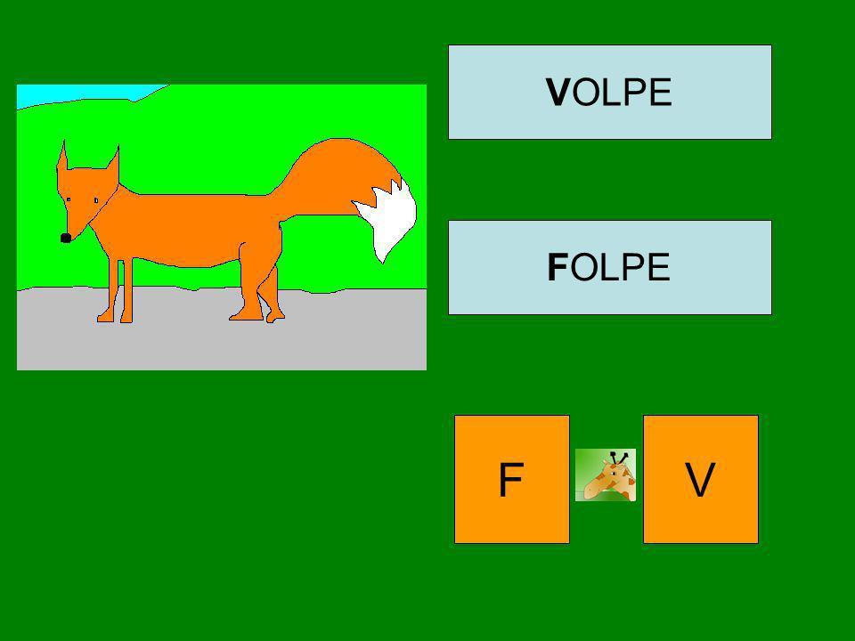 VOLPE FOLPE F V