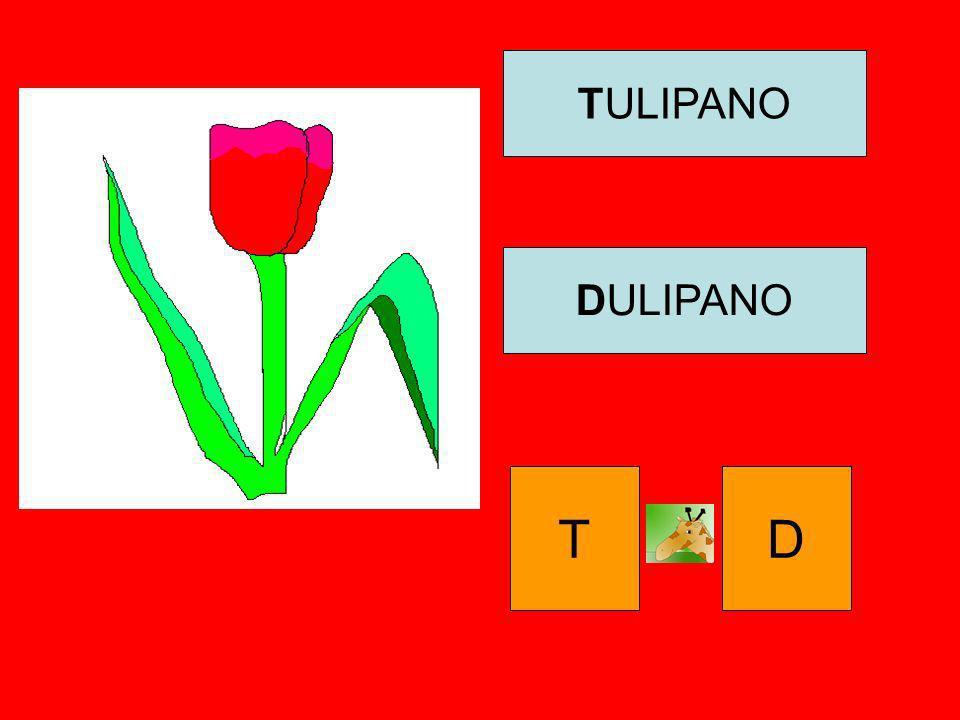 TULIPANO DULIPANO T D