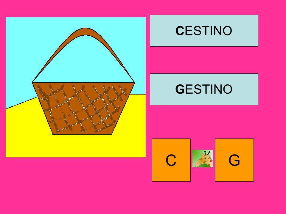 CESTINO GESTINO C G