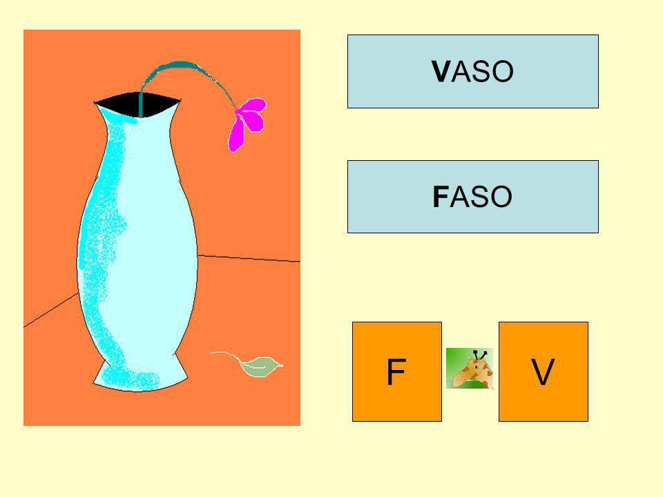 VASO FASO F V