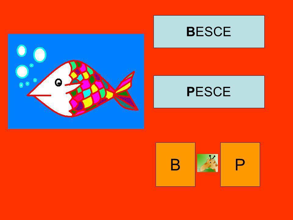 BESCE PESCE B P