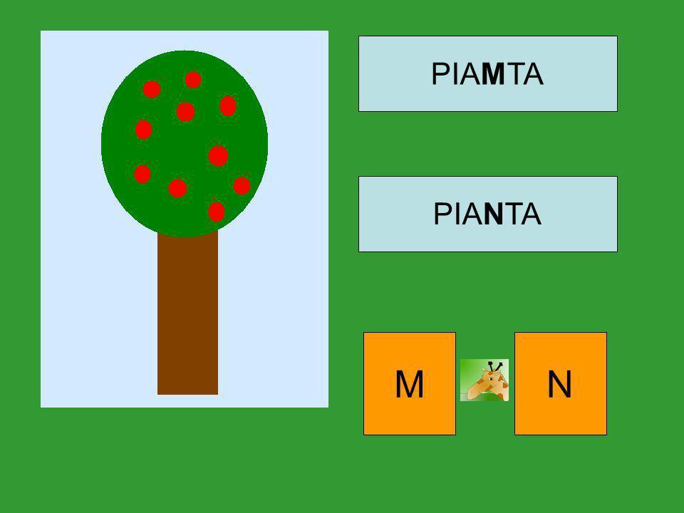 PIAMTA PIANTA M N