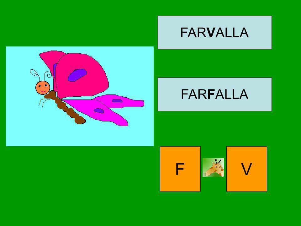 FARVALLA FARFALLA F V