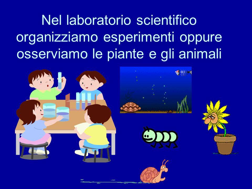 Nel laboratorio scientifico organizziamo esperimenti oppure osserviamo le piante e gli animali
