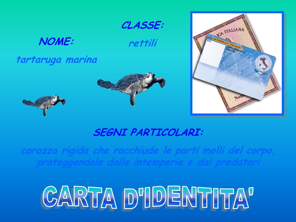 CARTA D IDENTITA CLASSE: rettili NOME: tartaruga marina