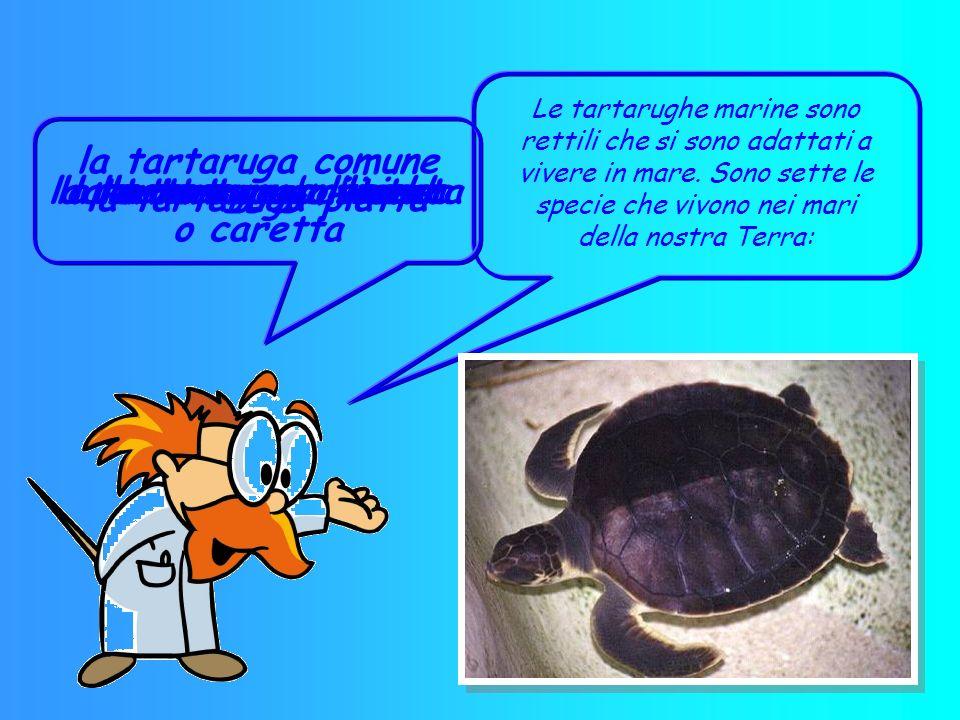 la tartaruga embricata