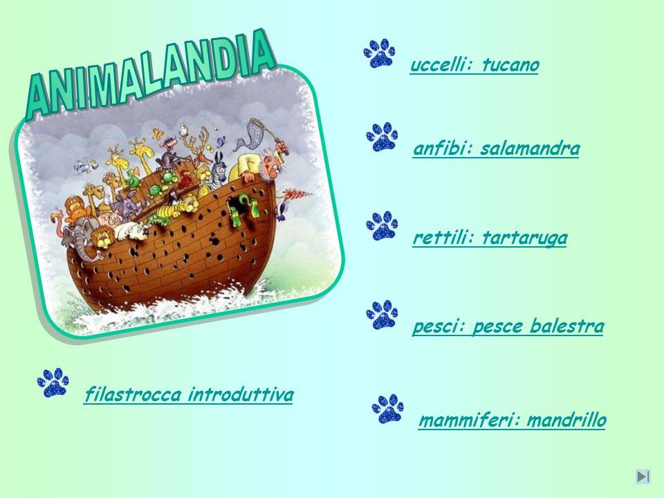 ANIMALANDIA uccelli: tucano anfibi: salamandra rettili: tartaruga