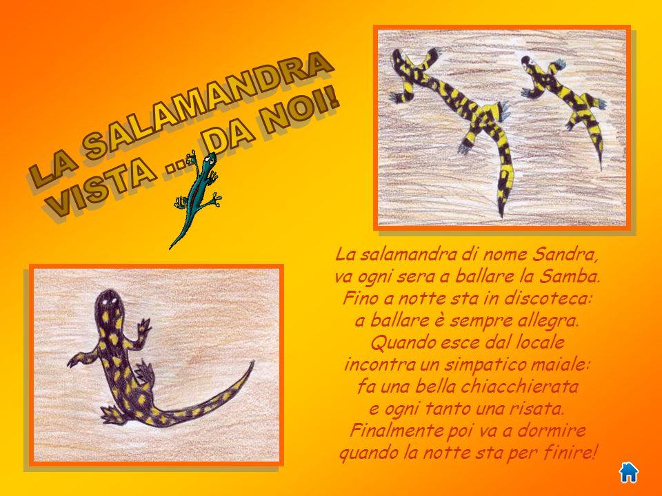 LA SALAMANDRA VISTA ... DA NOI! La salamandra di nome Sandra,