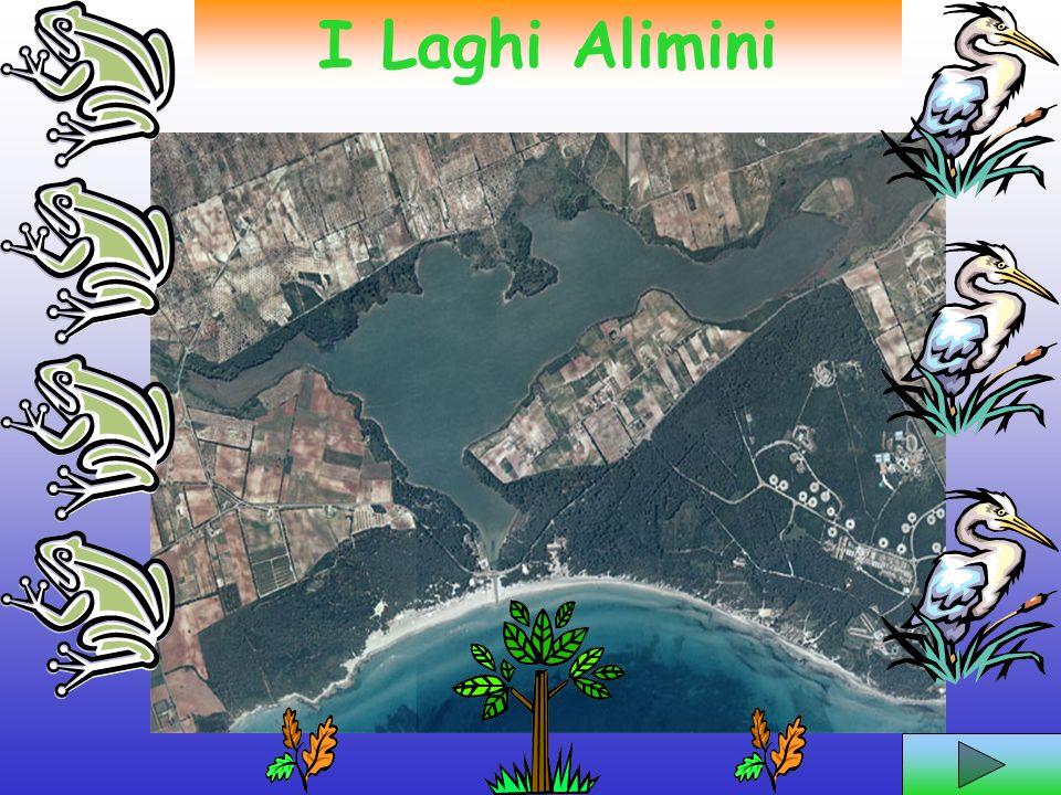 I Laghi Alimini