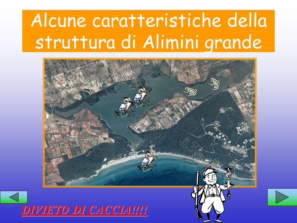 Alcune caratteristiche della struttura di Alimini grande